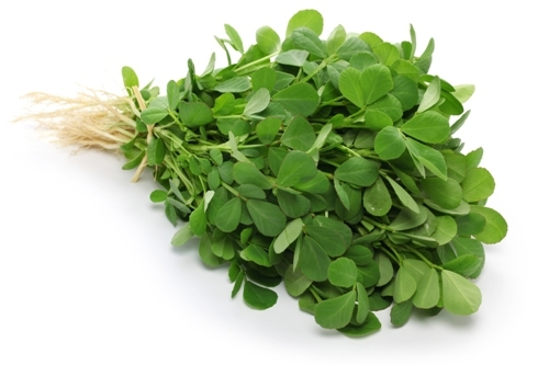 Fenugreek (Methi) — replantable (4884)