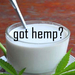 Have you tried to drink HEMP MILK? What are the benefits of HEMP MILK?