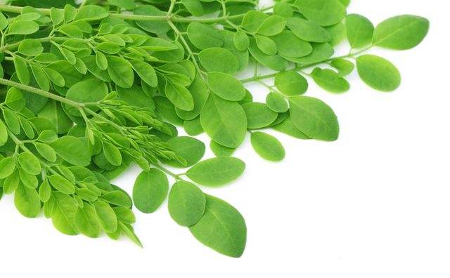 """Miracle Tree"" Moringa!! Benefits of Moringa"